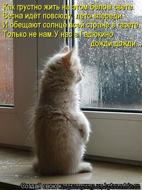 Котоматрица: Весна идёт повсюду, лето впереди. И обещают солнце всей стране в газете, Только не нам.У нас в Гадюкино  дожди,дожди... Как грустно жить на это