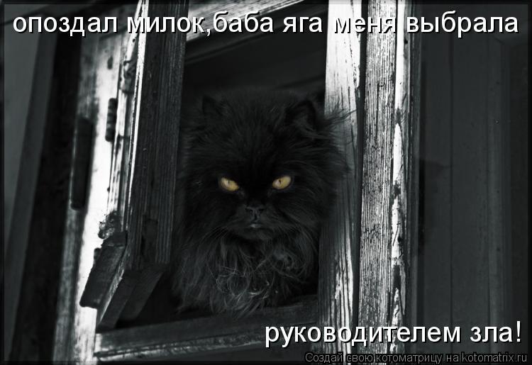 Котоматрица: опоздал милок,баба яга меня выбрала  руководителем зла!