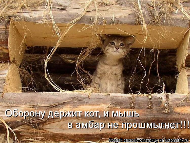 Котоматрица: Оборону держит кот, и мышь  в амбар не прошмыгнет!!!