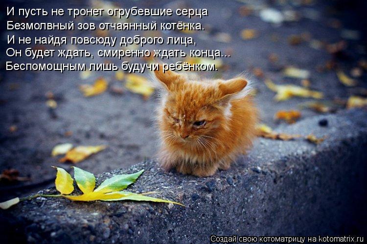 Котоматрица: И пусть не тронет огрубевшие серца И не найдя повсюду доброго лица, Он будет ждать, смиренно ждать конца... Безмолвный зов отчаянный котёнка.