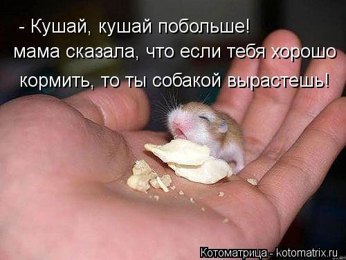 Котоматрица: - Кушай, кушай побольше! мама сказала, что если тебя хорошо кормить, то ты собакой вырастешь!