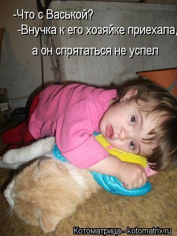 Котоматрица: -Что с Васькой? -Внучка к его хозяйке приехала, а он спрятаться не успел