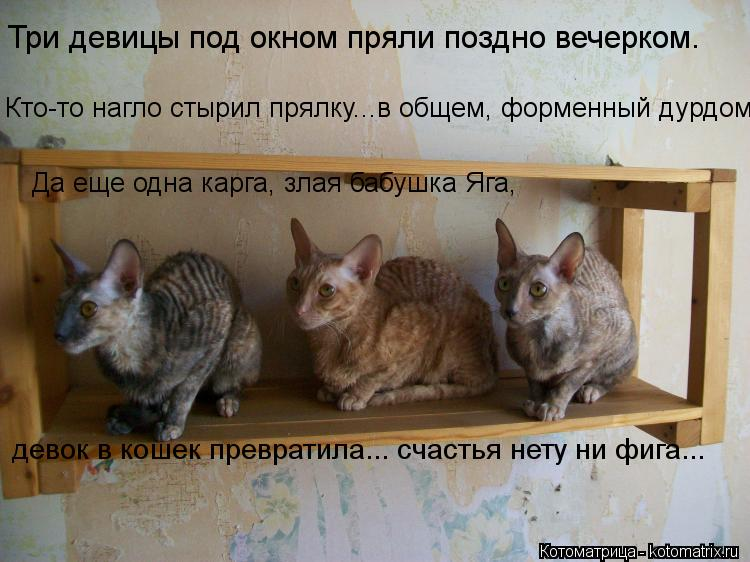 Котоматрица: Три девицы под окном пряли поздно вечерком. Кто-то нагло стырил прялку...в общем, форменный дурдом. Да еще одна карга, злая бабушка Яга, девок