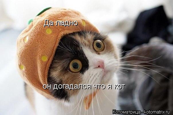 Котоматрица: Да ладно как клубника не мяукает он догадался что я кот