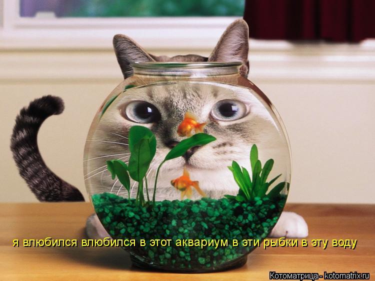 Котоматрица: я влюбился влюбился в этот аквариум в эти рыбки в эту воду