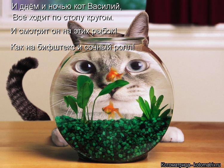 Котоматрица: И днём и ночью кот Василий, Всё ходит по столу кругом. И смотрит он на этих рыбок! Как на бифштекс и сочный ролл!