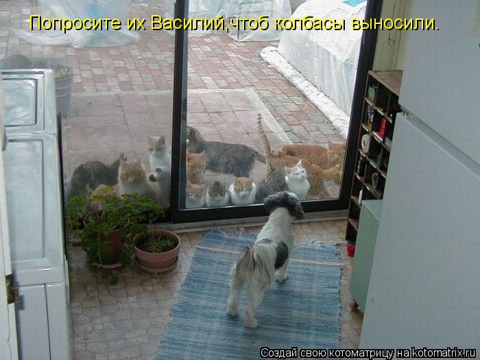 Котоматрица: Попросите их Василий,чтоб колбасы выносили.