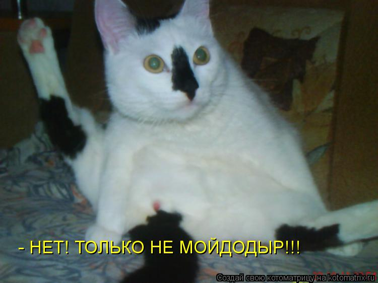 Котоматрица: - НЕТ! ТОЛЬКО НЕ МОЙДОДЫР!!!