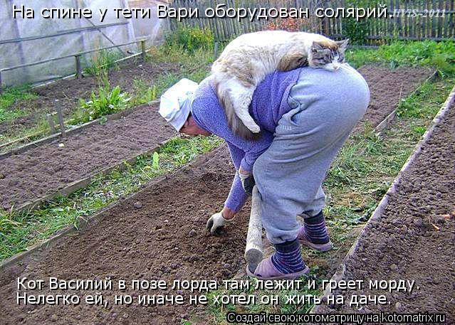 Котоматрица: На спине у тети Вари оборудован солярий. Кот Василий в позе лорда там лежит и греет морду. Нелегко ей, но иначе не хотел он жить на даче.