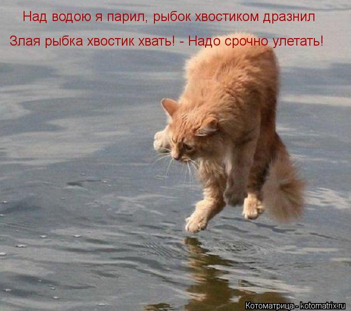 Котоматрица: Над водою я парил, рыбок хвостиком дразнил Злая рыбка хвостик хвать! - Надо срочно улетать!