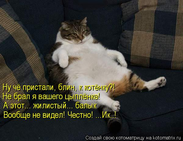 Котоматрица: Ну чё пристали, блин, к котёнку?! Не брал я вашего цыплёнка! А этот... жилистый... балык Вообще не видел! Честно! ...Ик..!