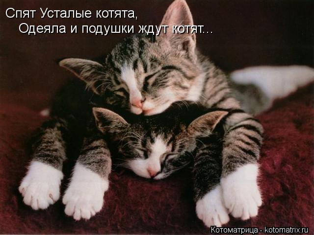 Котоматрица: Спят Усталые котята, Одеяла и подушки ждут котят...