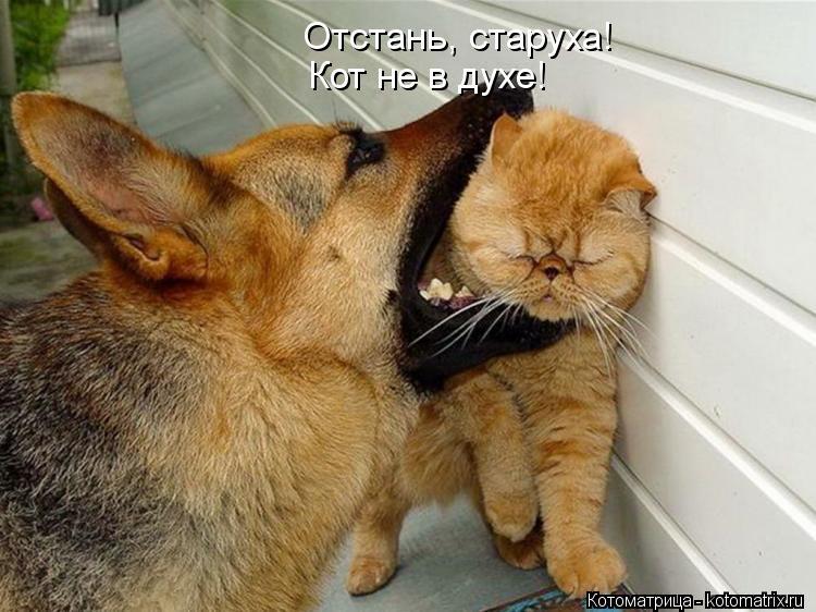 Котоматрица: Отстань, старуха! Кот не в духе!