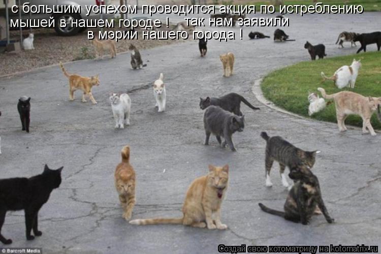 Котоматрица: с большим успехом проводится акция по истреблению  мышей в нашем городе ! так нам заявили в мэрии нашего города !