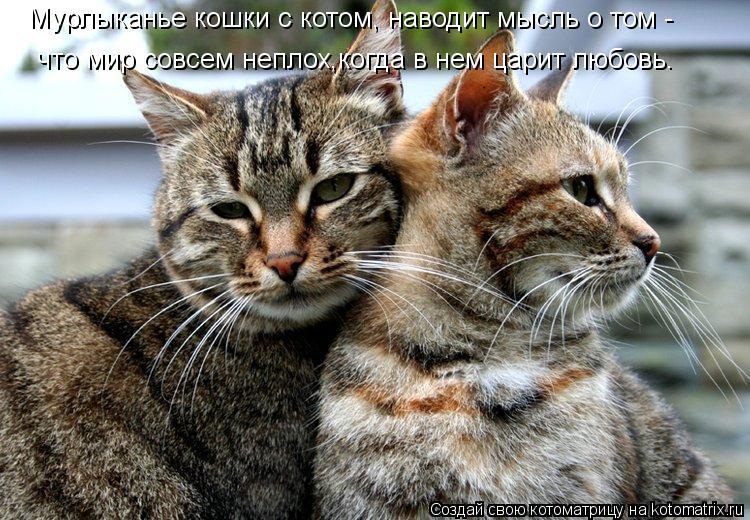 Котоматрица: Мурлыканье кошки с котом, наводит мысль о том - что мир совсем неплох,когда в нем царит любовь.