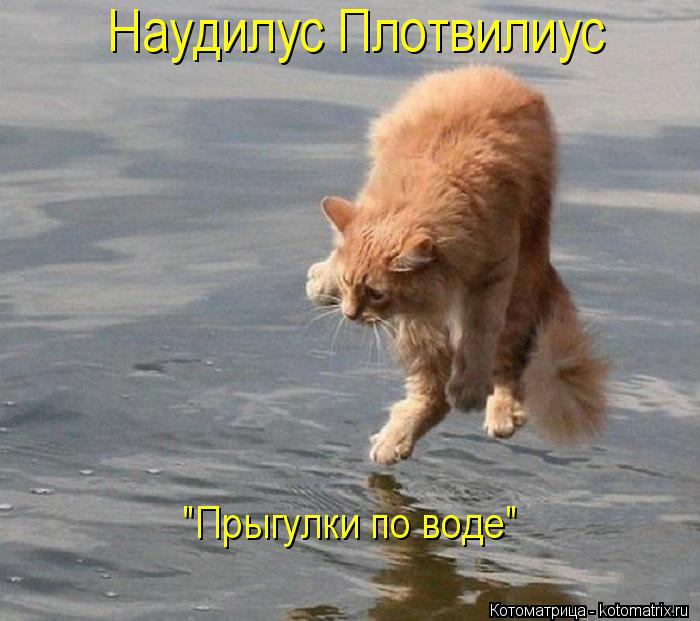 "Котоматрица: Наудилус Плотвилиус ""Прыгулки по воде"""