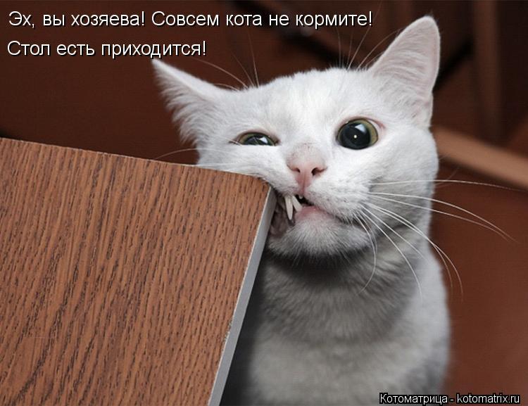 Котоматрица: Эх, вы хозяева! Совсем кота не кормите! Стол есть приходится!