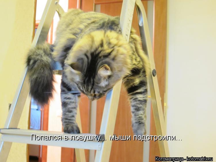 Котоматрица: Попался в ловушку... мыши подстроили...