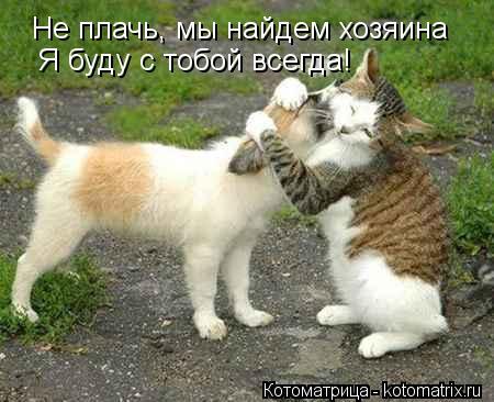 Котоматрица: Не плачь, мы найдем хозяина Я буду с тобой всегда!