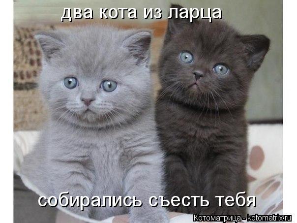 Котоматрица: два кота из ларца собирались съесть тебя
