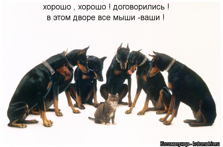 Котоматрица: хорошо , хорошо ! договорились ! в этом дворе все мыши -ваши !