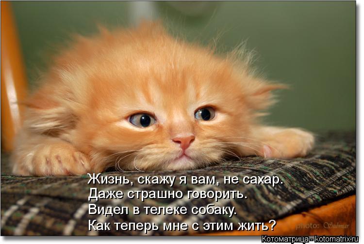 Котоматрица: Жизнь, скажу я вам, не сахар. Даже страшно говорить. Видел в телеке собаку. Как теперь мне с этим жить?