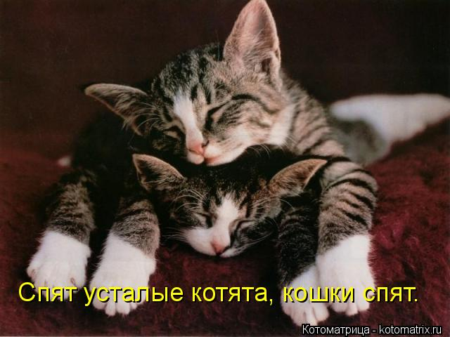 Котоматрица: Спят усталые котята, кошки спят.