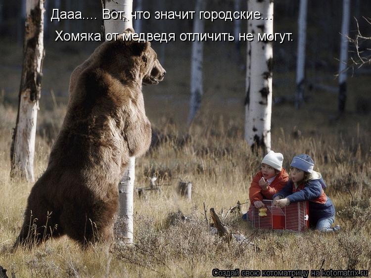 Котоматрица: Дааа.... Вот, что значит городские... Хомяка от медведя отличить не могут.