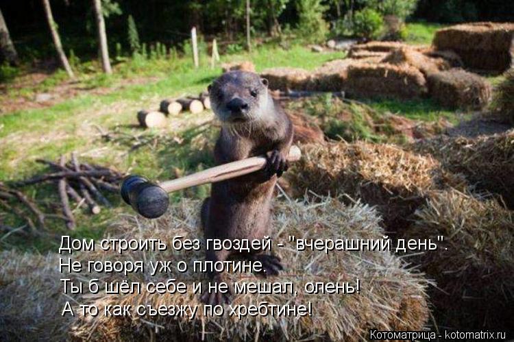 """Котоматрица: Дом строить без гвоздей - """"вчерашний день"""". Не говоря уж о плотине. Ты б шёл себе и не мешал, олень! А то как съезжу по хребтине!"""