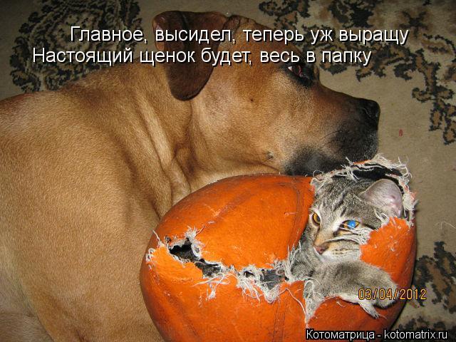 Котоматрица: Главное, высидел, теперь уж выращу Настоящий щенок будет, весь в папку
