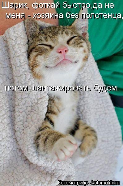 Котоматрица: Шарик, фоткай быстро,да не меня - хозяина без полотенца, потом шантажировать будем.
