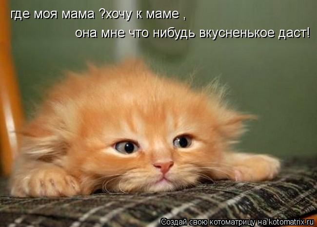 Котоматрица: где моя мама ?хочу к маме , она мне что нибудь вкусненькое даст!