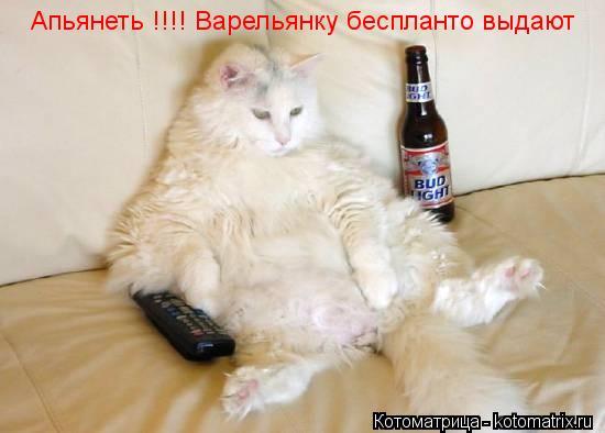 Котоматрица: Апьянеть !!!! Варельянку беспланто выдают