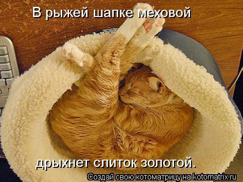 Котоматрица: В рыжей шапке меховой дрыхнет слиток золотой.
