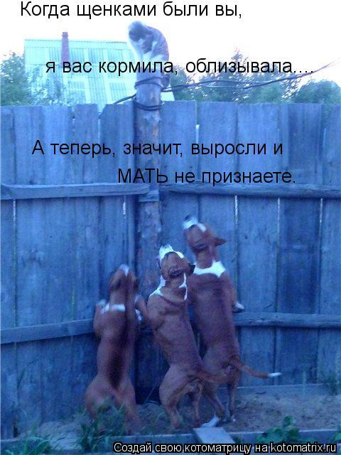 Котоматрица: Когда щенками были вы, я вас кормила, облизывала.... А теперь, значит, выросли и МАТЬ не признаете.