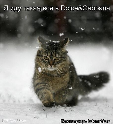 Котоматрица: Я иду такая вся в Dolce&Gabbana.