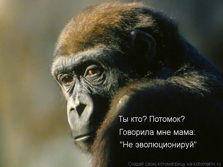 """Котоматрица: Ты кто? Потомок? Говорила мне мама: """"Не эволюционируй"""""""