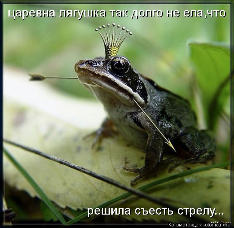 Котоматрица: царевна лягушка так долго не ела,что решила съесть стрелу...