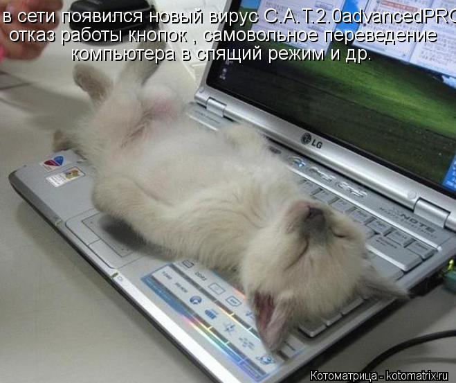 Котоматрица: в сети появился новый вирус C.A.T.2.0advancedPRO отказ работы кнопок , самовольное переведение  компьютера в спящий режим и др.