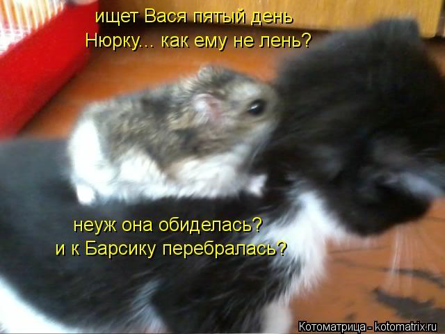 Котоматрица: ищет Вася пятый день Нюрку... как ему не лень? неуж она обиделась? и к Барсику перебралась?