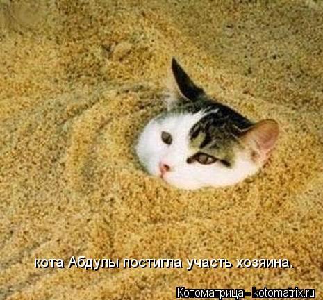 Котоматрица: кота Абдулы постигла участь хозяина.