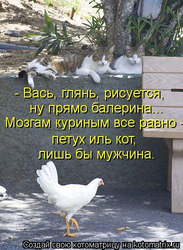 Котоматрица: - Вась, глянь, рисуется, ну прямо балерина... петух иль кот, лишь бы мужчина. Мозгам куриным все равно -