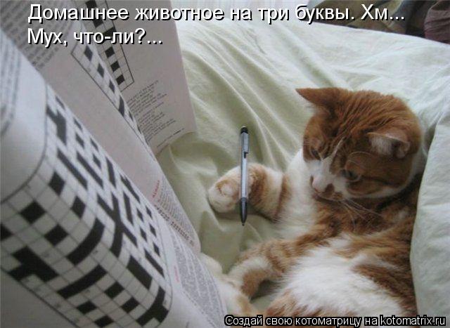 Котоматрица: Домашнее животное на три буквы. Хм... Мух, что-ли?...