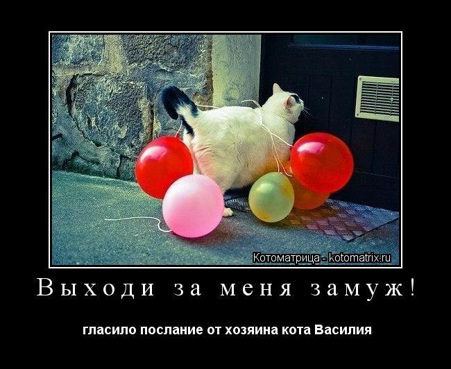 Котоматрица: Выходи за меня замуж!  гласило послание от хозяина кота Василия