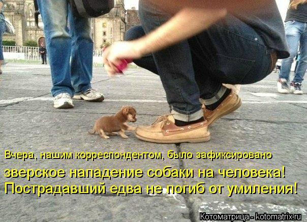 Котоматрица: Вчера, нашим корреспондентом, было зафиксировано  зверское нападение собаки на человека!   Пострадавший едва не погиб от умиления!