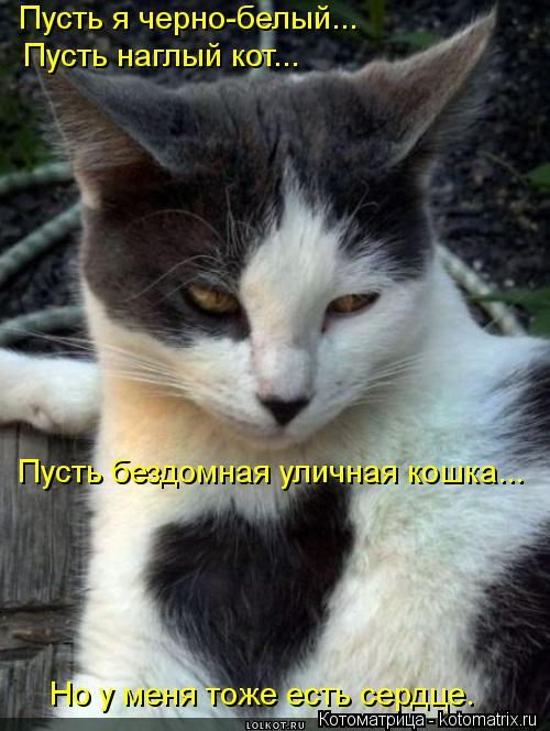 Котоматрица: Пусть я черно-белый... Пусть наглый кот... Пусть бездомная уличная кошка... Но у меня тоже есть сердце.
