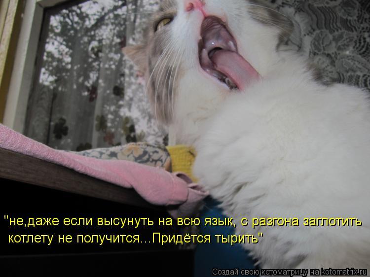 """Котоматрица: """"не,даже если высунуть на всю язык, с разгона заглотить котлету не получится...Придётся тырить"""""""