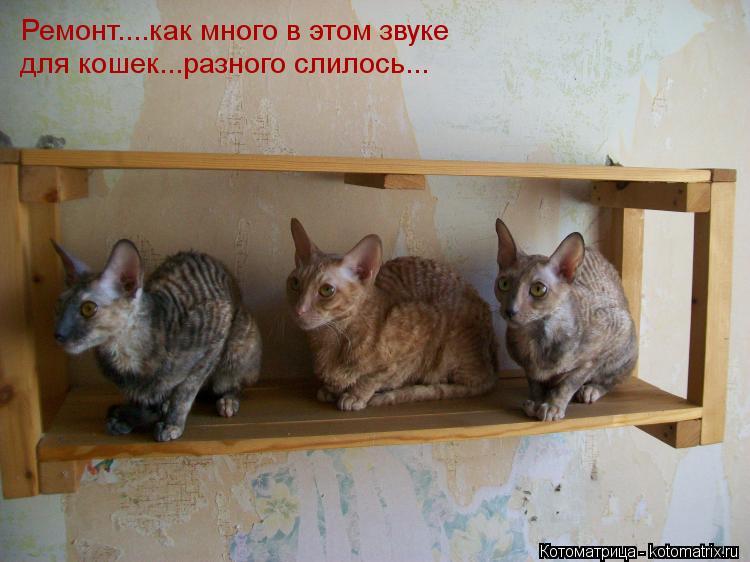 Котоматрица: Ремонт....как много в этом звуке для кошек...разного слилось...