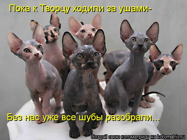 Котоматрица: Пока к Творцу ходили за ушами- Без нас уже все шубы разобрали...