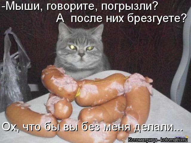 Котоматрица: -Мыши, говорите, погрызли? Ох, что бы вы без меня делали... А  после них брезгуете?